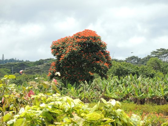 Beautiful and diverse vegetation - Picture of Dole ...