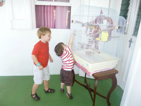 Clay Villa Plantation House & Gardens: our children excited by the one legged parrot