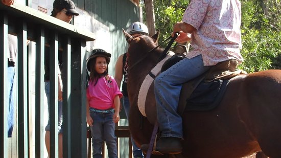 Happy Trails Hawaii: Spirit wants to be pet during while Mark is explaining how to ride a horse.