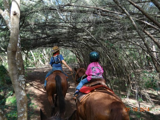 Happy Trails Hawaii: beautiful scene from the trail