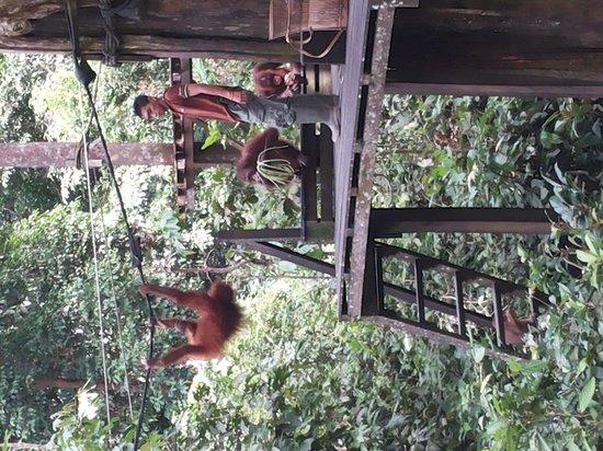 Sepilok Forest Edge Resort: Sanctuary