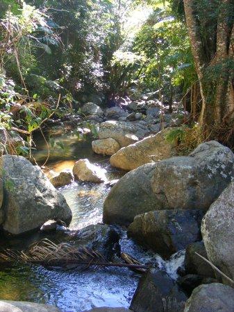 Mt Warning Rainforest Park 사진