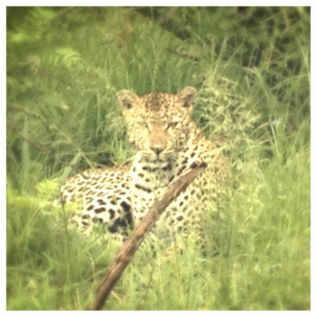 andBeyond Kirkman's Kamp: amazing leopard
