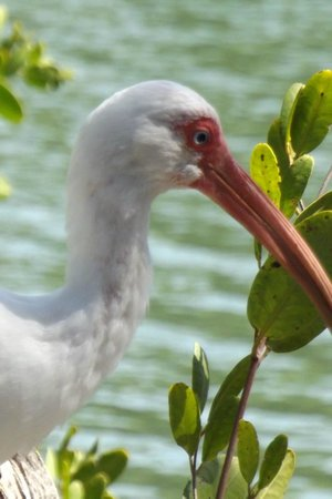 Marie Selby Botanical Gardens : Seen this bird while strolling around the grounds