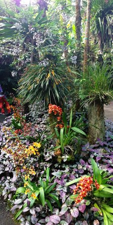 Hawaii Tropical Botanical Garden : orchids