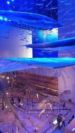 Guangdong Museum : Whales vs Dino