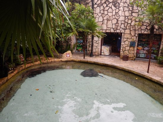 Xcaret Eco Theme Park: Бассейн со скатами
