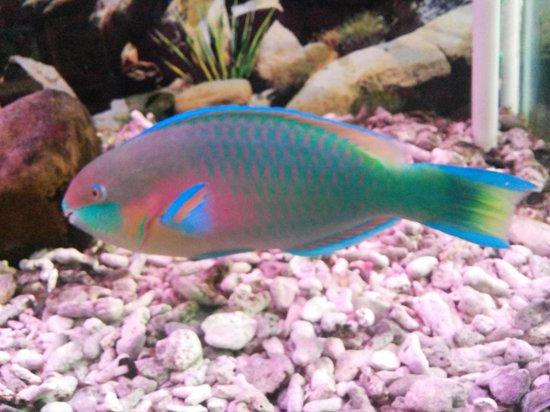 Samudrika Marine Museum: Parrot Fish