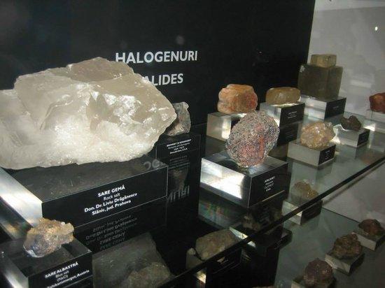 Grigore Antipa National Museum of Natural History: 8