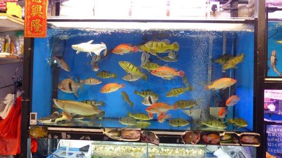 Goldfish Street (Tung Choi Street) : Lots of fish at Goldfish Street Market