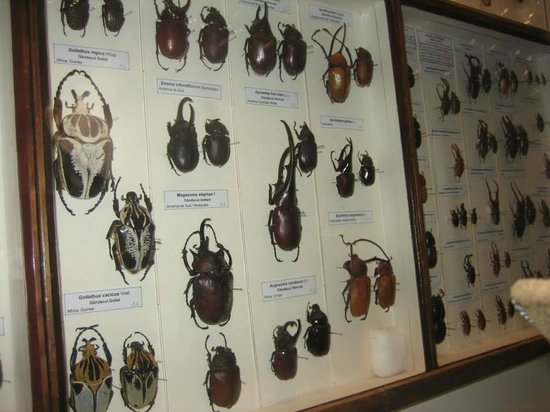 Grigore Antipa National Museum of Natural History: 3