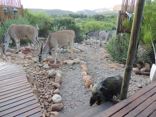 Zwartberg View Mountain Lodge : Encounter with animals
