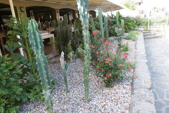 Hotel La Pagerie: mini jardin exotique