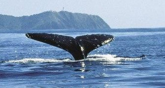 Cape Byron YHA: Whale watching in Winter!