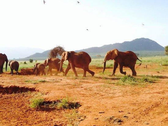Sandies Tropical Village: Safari sur 2 jours par organisé par Asshad