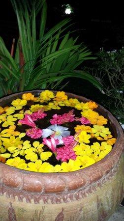 Sri Lancashire Guest House : garden