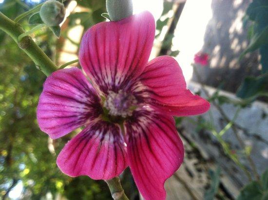 San Francisco Botanical Garden: Pretty flower