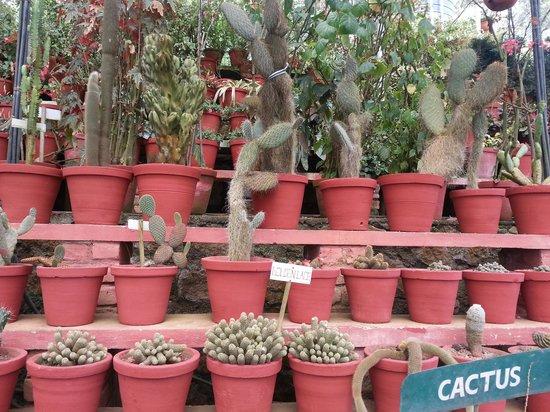 Rose Gardens: cactus