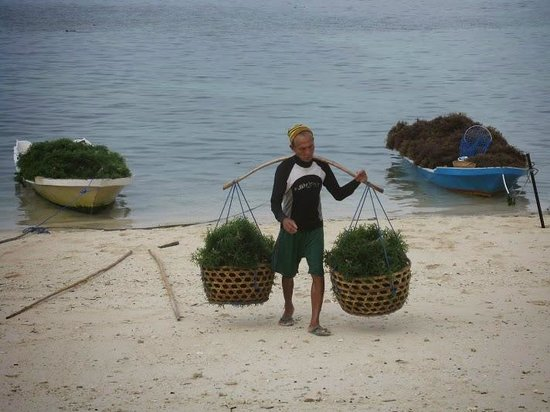 World Diving Lembongan : Sea weed farmers