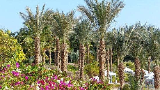 Four Seasons Resort Sharm El Sheikh: Resort Picture