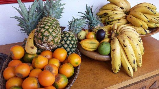 Hacienda Venecia Coffee Farm: Fruits for your pleasure