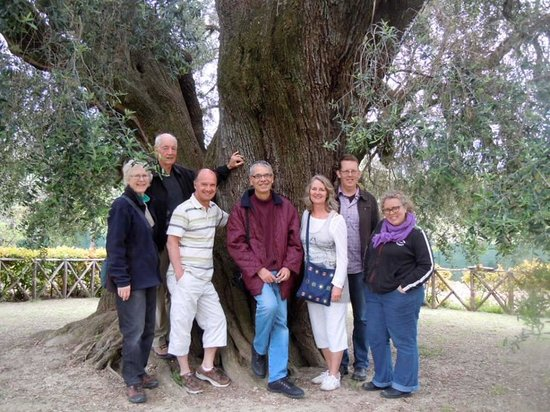 Convivio Rome - Olive Oil Tour : Largest Olive tree in Europe