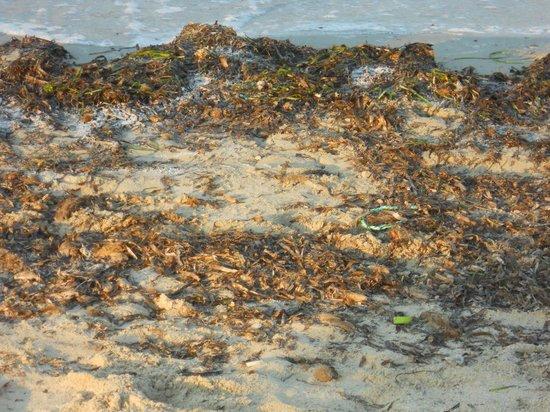 Odyssee Resort & Thalasso: Il bagnasciuga 2