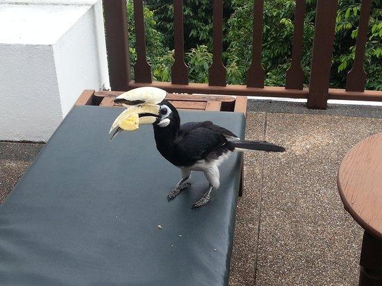 Pangkor Laut Resort: Hornbill at the hill villa deck chair