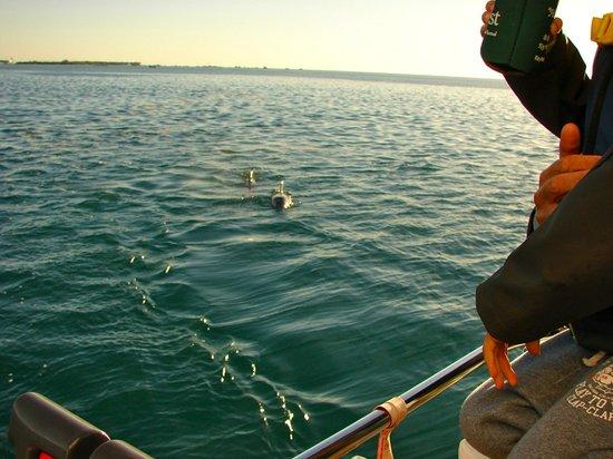 Catamaran Echo: Dolphin show!
