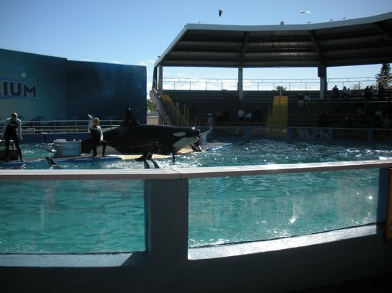 Key Biscayne, FL: Lolita the Killer Whale