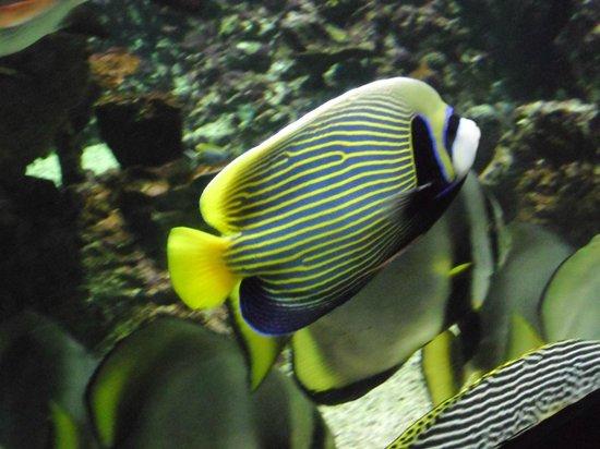 Aquarium Planet Ocean: Poissons exotiques