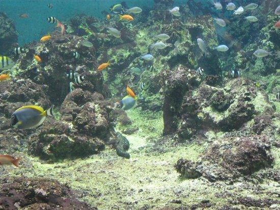Aquarium Mare Nostrum: Petits poissons exotiques