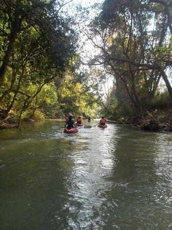 Chiang Mai Mountain Biking & Kayaks: Jungle overhangs