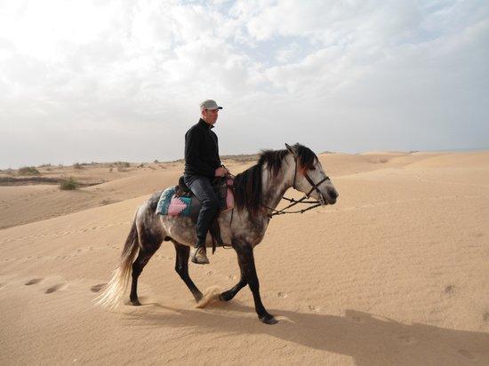 Equi Evasion : dans les dunes
