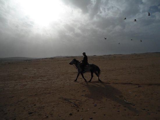 Equi Evasion : sur la plage