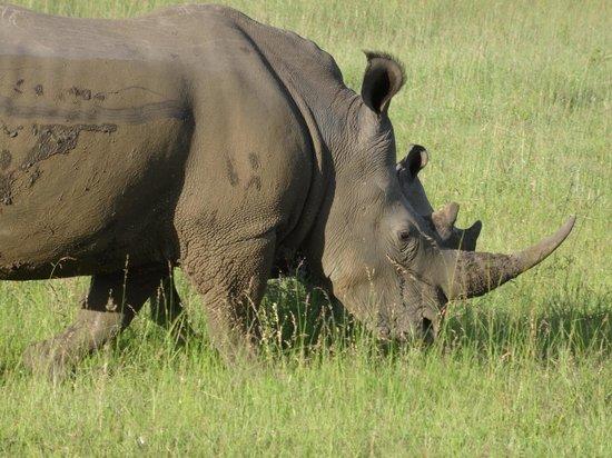 Nkomazi Game Reserve: grazend naast de landrover.....