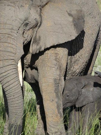 Nkomazi Game Reserve: kuddee van 15 olifanten kwamen langs.......