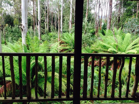 Lemonthyme Wilderness Retreat: The view from our verandah