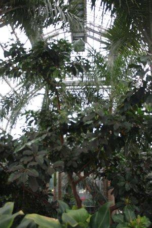 United States Botanic Garden: Botanic Gardens in December 2013