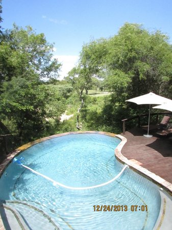 Elephant Plains Game Lodge: common pool area