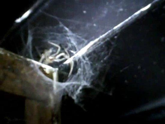 Aron Guest House : Dead spider in doorway