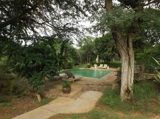 Thornybush Game Lodge: Pool Area