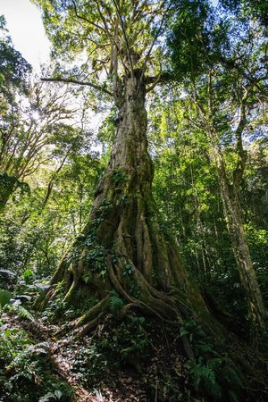 Pipeline trail tree