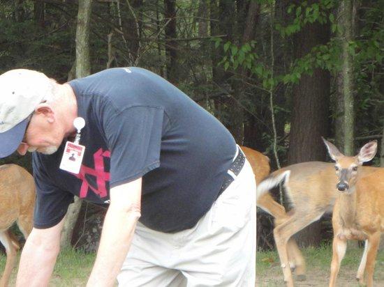 Cove Haven Resort : Honest Phil feeding the deer