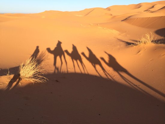 Morocco Excursions: Ships of desert