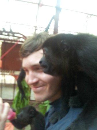 Fundación Jaguar Rescue Center: Feeding the Monkeys