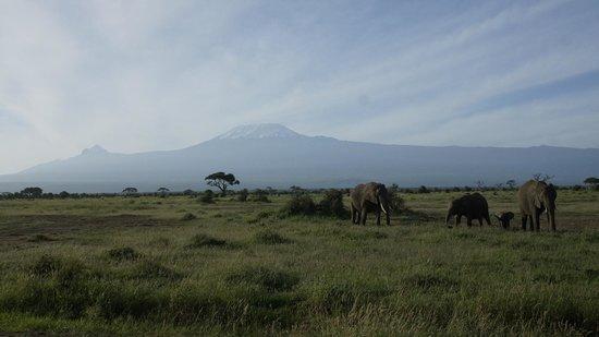 Amboseli National Park: Кили и слоны