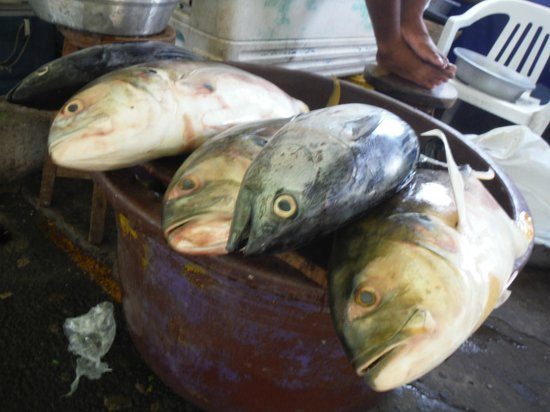 Malecon Puerto de la Libertad : Various types of fresh fish
