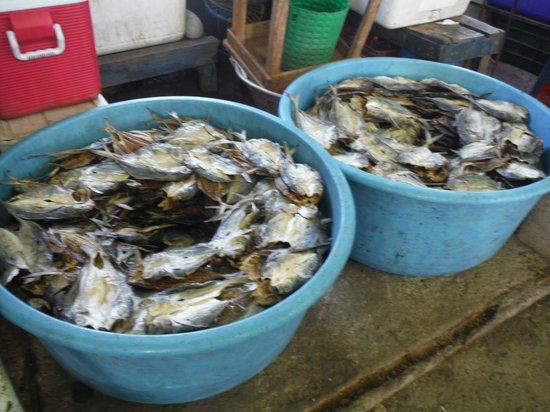 Malecon Puerto de la Libertad : Crab