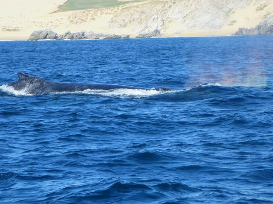 Fishing Charters Cabo: We were 10 feet from several humpbacks